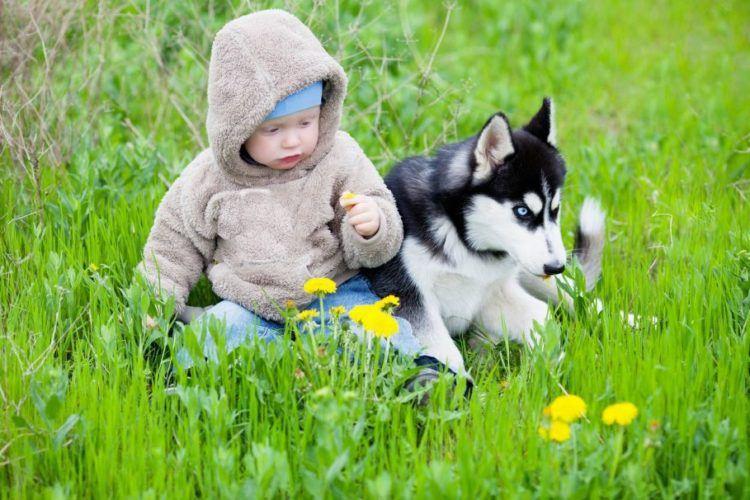 Хаски и маленький ребенок фото